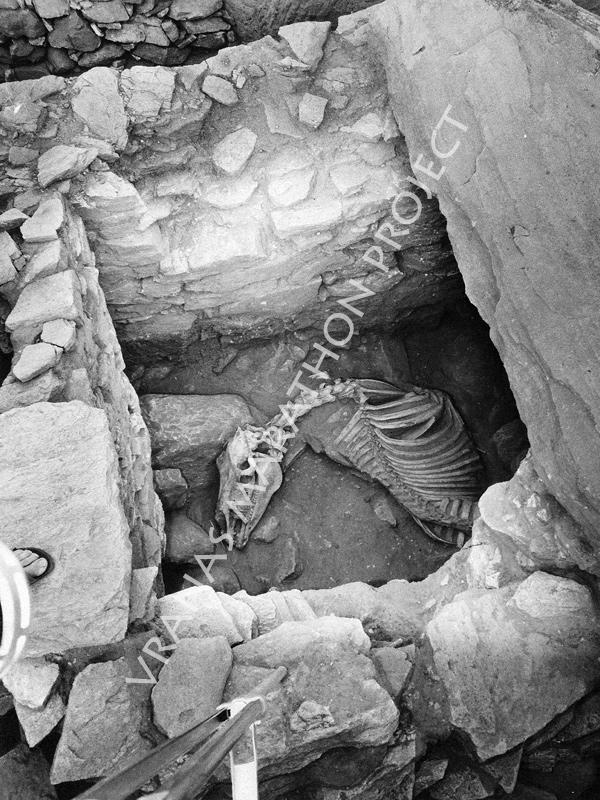 Τύμβος Ι, τάφος 3: το άλογο - Βρανάς Μαραθώνα